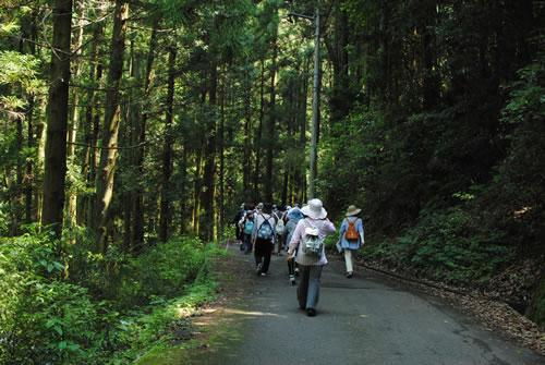 涼しい森林の中を歩く