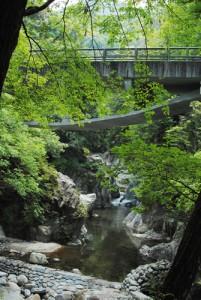 新緑が美しい鈍川渓谷
