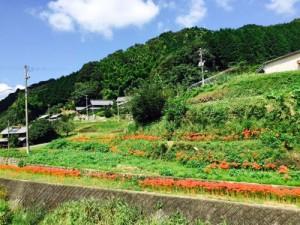 150918 鈍川探訪7