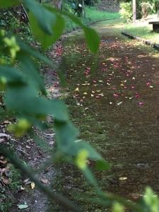 万葉の森池4